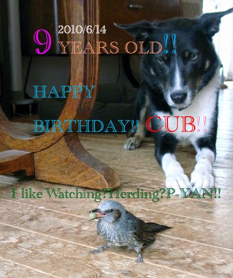 Cub_birthday2