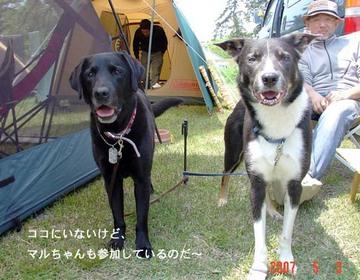 Camp1_1