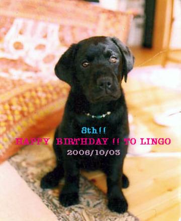 Lingo8