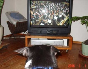 newyearconcert_with_cub